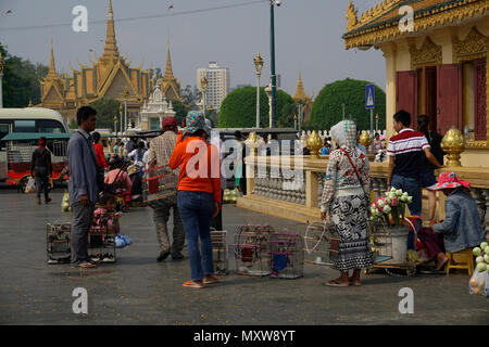 Captured birds for release to freedom, a buddhist ritual during Chinese New Year, Phnom Penh, Cambodia - Stock Photo
