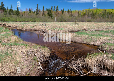 Ontonagon, Michigan - The Little Carp River in Porcupine Mountains Wilderness State Park. Water in park streams is often brown due to tannins leached  - Stock Photo