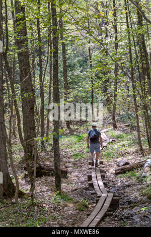 Ontonagon, Michigan - A hiker on boardwalk on a wet section of the Little Carp River Trail in Porcupine Mountains Wilderness State Park. - Stock Photo
