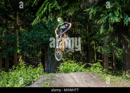 Mountain biking in the Royal Forest of Dean, Gloucestershire. - Stock Photo