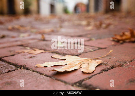 An autumn leaf on a paved street, selective focus. - Stock Photo