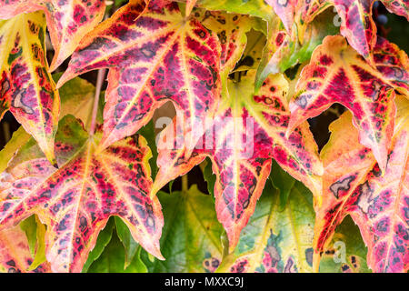 Red leaves fall background. Natural fresh autumn pattern. - Stock Photo
