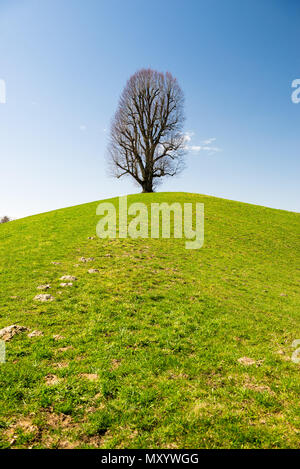 old limetree tree on hill in Emmental - Stock Photo