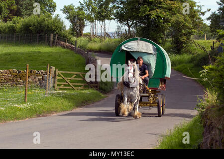Kirkby Stephen, Cumbria, UK. 5th June, 2018. Weather.  Richard Huntly & Members of the travelling community head for Appleby Horse Fair as the roads in Cumbria & the Yorkshire Dales provide grazing for their Cob Horses en-rout to their annual gathering. The horse fair is held each year in early June. It attracts about 10,000 Gypsies and Travellers and about 30,000 other people. Rather than an organised event with a set programme, it's billed as the biggest traditional Gypsy Fair in Europe, one that's like a big family get together. Credit: MediaWorldImas/AlamyLiveNews - Stock Photo