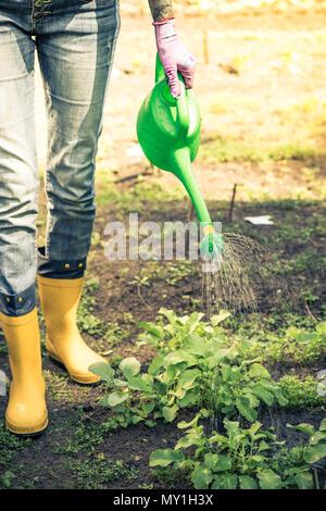 Tattooed woman watring plants in garden wearing wellies. - Stock Photo