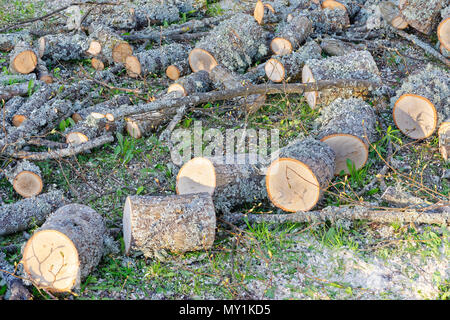 Workplace for preparing of firewood from cut down tree branch - Stock Photo
