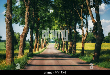 Asphalt country road running through tree alley - Stock Photo