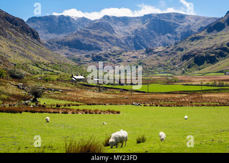 View up Nant Ffrancon valley to Glyderau mountains with sheep grazing in country fields in Snowdonia National Park. Ogwen, Bethesda, North Wales, UK - Stock Photo