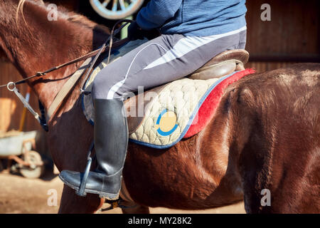 Close up of a chestnut horse, rider sitting on the saddle and black riding boot in the stirrup - Stock Photo
