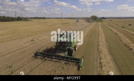 Combine harvester on a wheat field at harvest.Aerial view of agricultural land with harvester.Combine harvesting wheat.Aerial view of agricultural land with harvester. Working Harvestgriculture Concept.4K video - Stock Photo