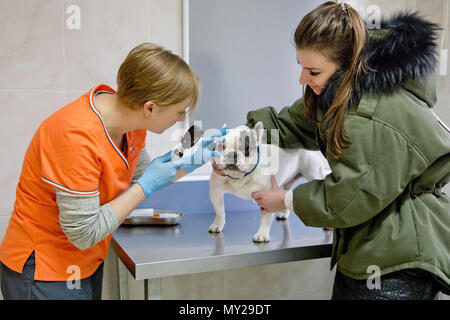 Veterinarian checks the eyes of a dog, biomicroscopy. Veterinarian ophthalmologist doing medical procedure, examining the eyes of a dog in a veterinary clinic. Healthy dog under medical exam. - Stock Photo
