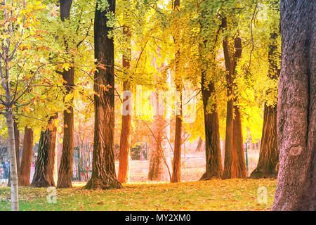 Blurred, soft focus image.Trees in autumn,fall park with sunset and sunshine landscape background. - Stock Photo