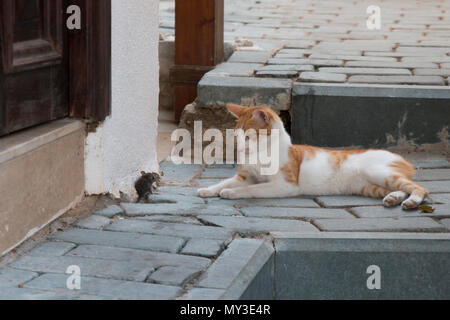 A stray cat is playing with a mouse - Stock Photo