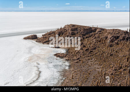 Trichoreceus Cactus on Isla Incahuasi (Isla del Pescado-Fish Island) in the middle of the world's biggest salt plain Salar de Uyuni, Bolivia - Stock Photo