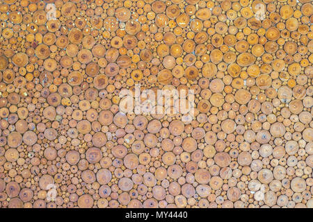 Wood texture background have many logs of tree for build the wall. Abstract photo of a pile of natural wooden logs background. - Stock Photo