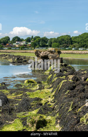 a scenic seascape of Bembridge harbour on the isle of wight with a wall covered in seaweed in the foreground. Atmospheric isle of wight scenery. - Stock Photo