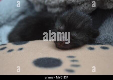 Sleeping black 1 week old kitten - Stock Photo