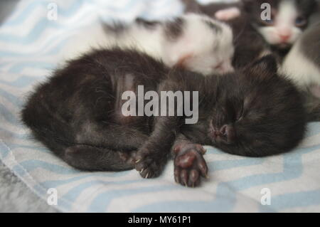 Sleeping black 3 week old kitten - Stock Photo