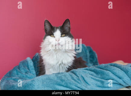 Cat on pink background - Stock Photo