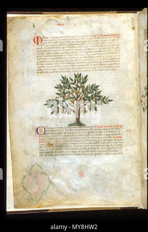 . English: arapion the Younger, Translation of the herbal (The 'Carrara Herbal'), including the Liber agrega, Herbolario volgare; De medicamentis, with index (ff. 263-265) Italy, N. (Padua); between c. 1390 and 1404 . between c. 1390 and 1404. An Italian translation, possibly from a Latin translation, of a treatise orginally written in Arabic by Serapion the Younger (Ibn Sarabi, likely 12th century). 99 Carrara Herbal04 - Stock Photo