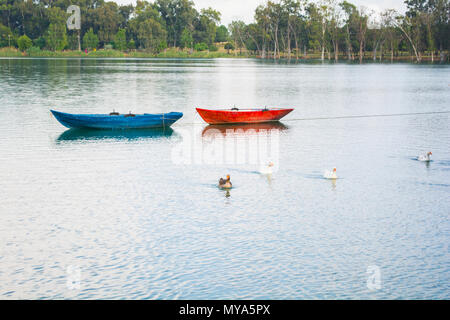 Ducks and blue and red Boats - Stock Photo