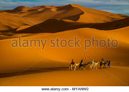 Riding on Camels in the Sahara Desert, Morocco - Stock Photo