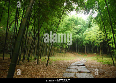 bamboo forest inside a mysterious mountain in China - Stock Photo