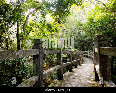 hiking path in forest - Stock Photo