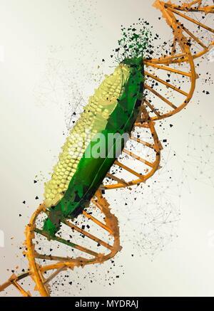 Genetically modified corn, illustration. - Stock Photo