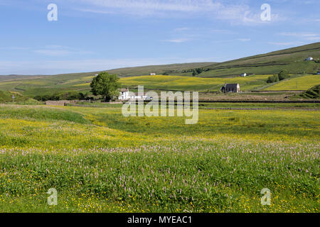 Harwood, Upper Teesdale, County Durham. 7th June 2018. UK Weather. After a cloudy start to the day the skies clear and the traditional wild flower hay meadows of Upper Teesdale in the North Pennines enjoy another day of sunshine. David Forster/Alamy Live News - Stock Photo