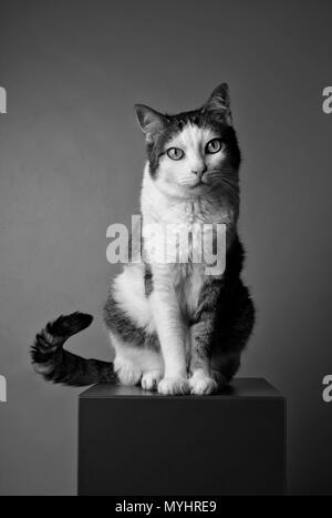 Black and white portrait of a tabby cat looking curious to the camera. - Stock Photo