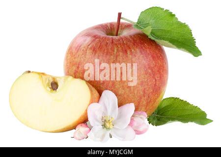 Apple fruit slice sliced blossom isolated on a white background - Stock Photo