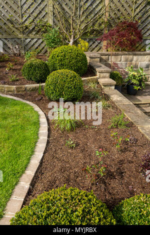 Beautiful, landscaped, private garden close-up with contemporary design, border plants, shrubs, box balls, terracing & lawn - Yorkshire, England, UK. - Stock Photo