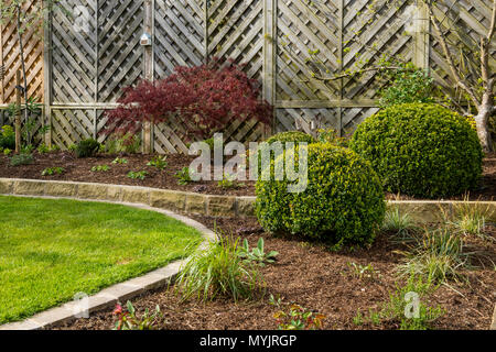 Beautiful, landscaped, private garden close-up with contemporary design, border plants, shrubs, box balls, acer & neat lawn - Yorkshire, England, UK. - Stock Photo