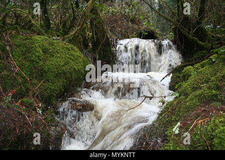 Waterfall in woodlands on the Brecon beacons national park, - Stock Photo