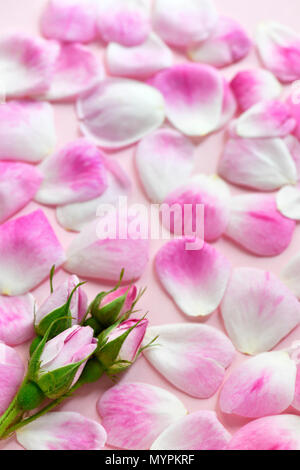 vertical image of pretty pink rose petals shot in a soft focus,  copy space in the background ideal for text for invitation or cards - Stock Photo