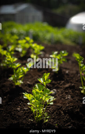 Shallow Focus on Seedling Plant With Plants Growing in the Background - Stock Photo