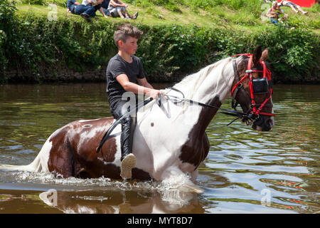 Appleby-in-Westmorland, U.K. 7th June 2018. Travellers swimming their horses in the River Eden  at the Appleby Horse Fair. The fair has existed since 1685 under a charter granted by King James II. Starting the first week in June and running for a week the fair is visited by Romany Gypsies, Horse Dealers and Travellers from across Europe/ Credit: Mark Richardson/Alamy Live News - Stock Photo