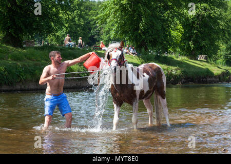 Appleby-in-Westmorland, U.K. 7th June 2018. Travellers wash their horses in the River Eden  at the Appleby Horse Fair. The fair has existed since 1685 under a charter granted by King James II. Starting the first week in June and running for a week the fair is visited by Romany Gypsies, Horse Dealers and Travellers from across Europe. Credit: Mark Richardson/Alamy Live News - Stock Photo