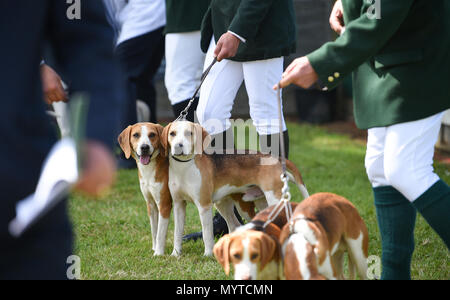 Ardingly Sussex UK 8th June 2018 - at the South of England Show in beautiful sunny weather held at the Ardingly Showground near Haywards Heath Sussex Credit: Simon Dack/Alamy Live News - Stock Photo