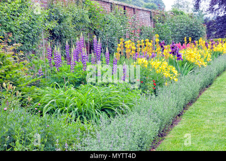 Colourful cottage flowers in bloom in english walled garden , after summer rain . - Stock Photo