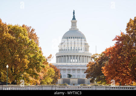 View of United States Congress Capitol building closeup framed by alley of golden orange yellow foliage autumn fall trees on street road during sunny  - Stock Photo