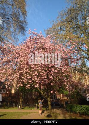 London, UK. 20th Apr, 2015. Spring in London Credit:  Clara Copley / StockimoNews/Alamy Live News - Stock Photo