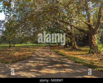 Seven Sisters Rd, London, UK. 04th Oct, 2016. Finsbury Park as the leaves are turning on a sunny day in October. - Stock Photo
