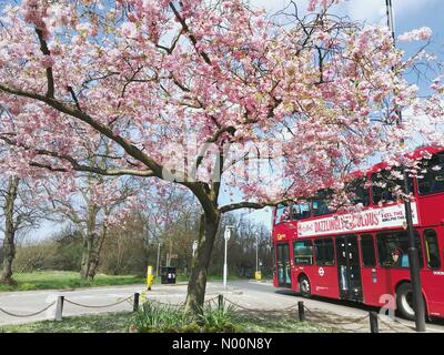 London, UK. 14th Apr, 2018. A red London bus passes by a blossom tree at Wimbledon Common on Saturday April 14th, 2018, as London enjoys a warm, sunny day after a damp and wet Easter. Credit: Katie Collins/StockimoNews/Alamy Live News - Stock Photo