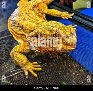 Wauwatosa, USA  28 April 2018  RETC Reptile Meet and Greet , 28th