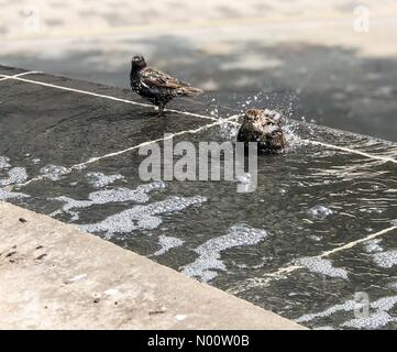 London, UK. 26th July, 2018. London. Cheapside, London. 26th July 2018. The heatwave continued in the capital today. Starlings cooling off in Cheapside in London. Credit: jamesjagger/StockimoNews/Alamy Live News - Stock Photo