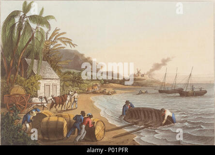 .  English: 'Shipping Sugar'This print is taken from William Clark's 'Ten views in the island of Antigua, in which are represented the process of sugar making, and the employment of the Negroes' (Thomas Clay, London, 1823). It shows the production of sugar, from planting to harvest, from processing to shipping. It depicts a group of well-dressed slaves planting sugar cane. After the cane was harvested and processed into raw sugar, it was loaded into barrels, known as hogsheads, and shipped to Britain for refining and sale. The first sugar plantation was established in 1674 by Sir Christopher C - Stock Photo