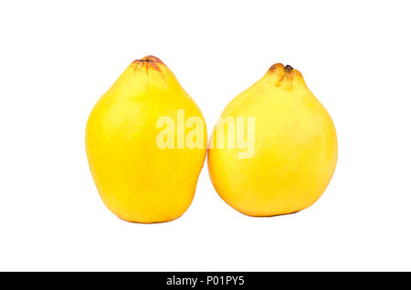 Ripe quince fruits isolated on white background - Stock Photo