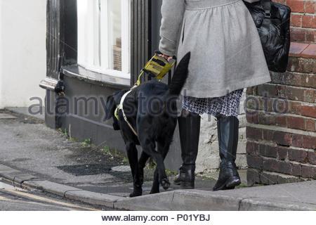 Pilot Walking Guide Dog